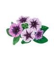 Petunia flowers bush vector image vector image