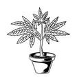pot cannabis drawing vector image