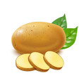 realistic detailed 3d whole potatoes and slices vector image