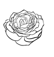 rose in the style of black and white engraving vector image vector image