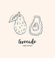 avocado drawing hand drawn sketch vector image vector image