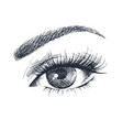 beautiful female eye vector image vector image