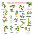 best herbs for impotence treatment vector image vector image