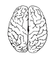 brain a top view vector image vector image