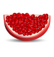 slice of pomegranate icon realistic style vector image vector image