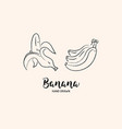 banana fruit drawing hand drawn bananas vector image vector image