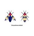 chrysochroa corbetti vector image vector image