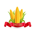 corn three ear of with leaves and red ribbon vector image vector image