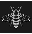 hand drawn engraving sketch bee for tattoo vector image
