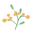 Orange Yarrow or Achillea Millefolium Flowers vector image vector image