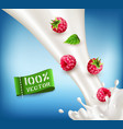 ripe red raspberry falling into the milk milk vector image vector image