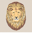 serious wild big cat Lion vector image vector image