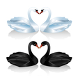 Set of white and black swans vector image