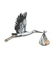 stork crane carry baby color sketch engraving