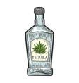 tequila bottle sketch vector image