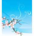 blossoming cherry and blue sky vector image vector image