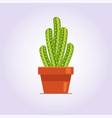 decorative cactus with prickles on white vector image