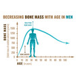 decreasing bone mass vector image vector image