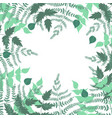 frame fern leaves and other plants vector image
