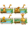 Giraffes in the wooden frames vector image vector image