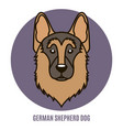 portrait of german shepherd dog vector image