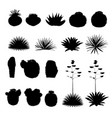 black silhouettes of round cacti and blue agave vector image