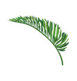 green leaf of tropical palm vector image