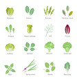 leafy vegetables flat icons set vector image vector image