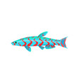 mandarin aquarium fish isolated on white graphic vector image