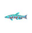 mandarin aquarium fish isolated on white graphic vector image vector image