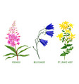 wild field plants and flowers set hand drawn vector image vector image