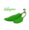 cartoon jalapeno slices hot green pepper vector image vector image