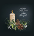 christmas pine tree branches with fir-cones vector image