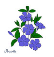 isolated decorative element periwinkle bouquet vector image vector image