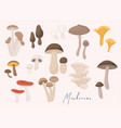 large mushroom set in flat design isolated vector image