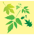 Nature leaves vector image vector image