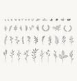 set elegant floral elements vector image