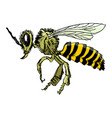 sketch of bee vector image vector image