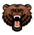 Angry brown bear head vector image