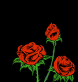 Rose on Black Drawing vector image vector image
