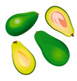 avocado fruit isolated on a white background vector image vector image