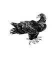 hand drawn black eagle - aquila verreauxii vector image vector image