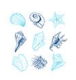 seashells freehand set vector image