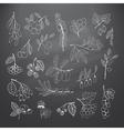 Set of garden and wild hand-drawn chalk berries vector image vector image