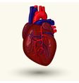 human heart cartoon vector image