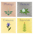 assembly shading style plantago vector image