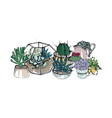 cactus and succulents composition collection vector image vector image