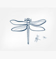 dragonfly insect art line isolated doodle vector image