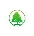 pine tree green ecology logo vector image vector image