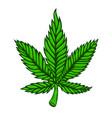 cannabis leaf on white background design element